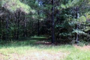 <p>Investment land for sale in AL,Recreational hunting land for sale in AL,Land for sale in AL</p>