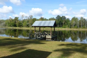 521 Acres Lacey Farm - Barnwell County SC