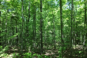 Homesite and Recreational Tract - Elmore County AL