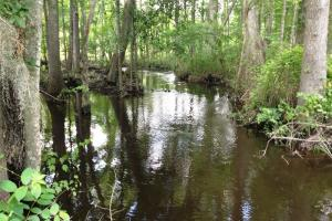 Congaree Hunting and Timber Land - Richland County SC