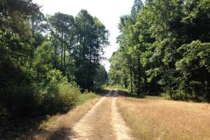 <p>sc hunting land for sale, timberland for sale sc</p>