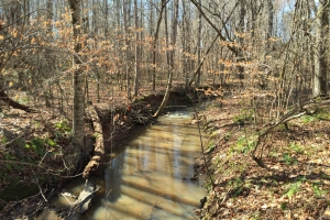 120 Acre Recreational Timber Investment - Lee County AL