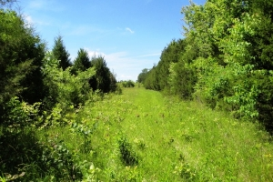 Private Hunting & Timber Land - Greene County AL