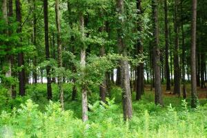 1.08 Acre Recreational Homesite - Hale County AL