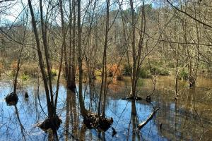 <p>al recreational land for sale, land for sale alabama</p>