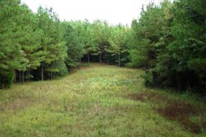 Hunting & Timber Land with Cabin - Sumter County AL