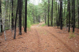 Recreational Hunting Tract - Tuscaloosa County AL