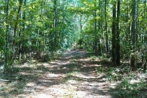 Land for sale in AL,Hunting land for sale in AL,Recreational land for sale in AL (2 of 4)