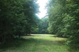 Timber & Recreational Land Investment - Macon County AL