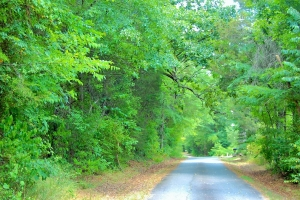 Great Falls Hunting & Timber Tract - Chester County SC