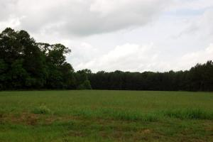 <p>Hunting land for sale in AL,Home for sale in AL,Recreational land for sale in AL</p>