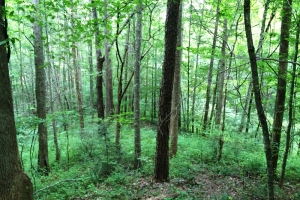 Land Investment/Development Property - Sevier County TN