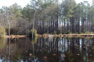 Hunting Tract with Pond - Georgetown County SC