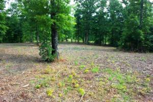 Photo 5 of 8  ·  tn land for sale, mountain land for sale, recreational land for sale