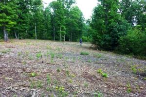 Photo 6 of 8  ·  tn land for sale, mountain land for sale, recreational land for sale
