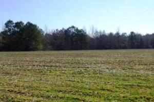 al land for sale, hunting land for sale, farming land for sale (8 of 12)