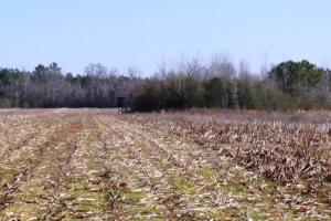 Farming & Hunting Land - Pickens County AL