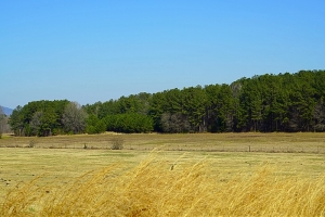 Jones Farm Agricultural Investment - Talladega County AL