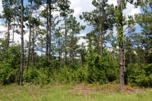11.5 Acre Conway Homesite - Horry County SC