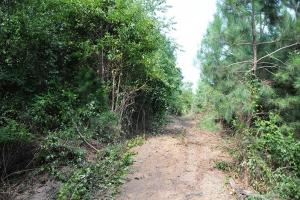 <p>sc land for sale, hunting land for sale, timber land for sale</p>