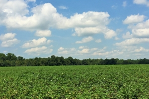 Florence Agricultural & Recreational Land - Florence County SC