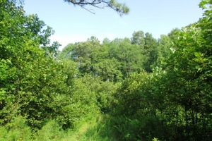 sc land for sale, timber land for sale, recreational land for sale