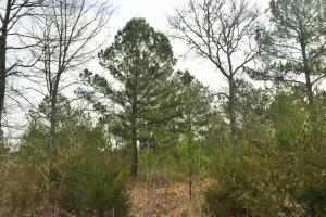 50 Acre Residential Recreational Land - Elmore County AL