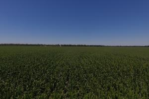 1,392 Acres Row Crop Farmland - Jefferson County AR