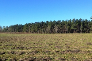 Aynor Hunting Homesite - Horry County SC