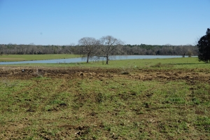 Sawyerville Pasture Land - Hale County AL