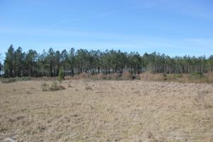 White Oak Private Homesite - Camden County GA