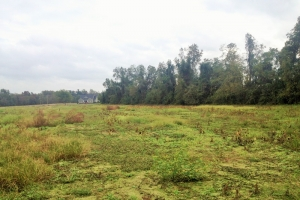 Aynor Residential Land - Horry County SC