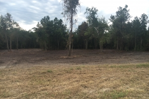 Affordable Aynor Homesite - Horry County SC
