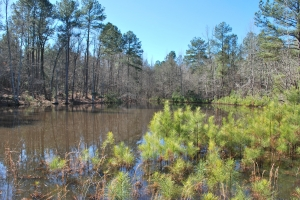 Edgefield Hunting & Timber Tract - Edgefield County SC