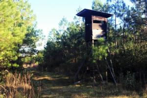 Loris Hunting Land - Horry County SC