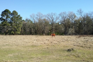 New Waverly Residential/Recreational Land - San Jacinto County TX