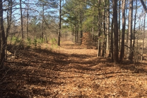 Fayette Timber & Hunting Investment - Fayette County AL