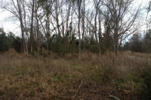 Brunson Residential Lot - Hampton County SC