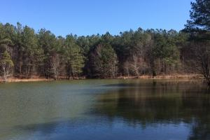 Winfield Recreation & Timber Land - Fayette County AL