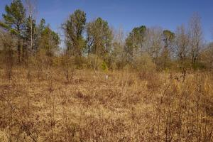 Photo 3 of 4  ·  3 of 4 Photos for Sawyerville Homesite & Timber Land in Hale County, AL