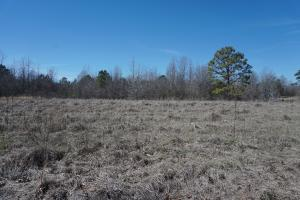 Sawyerville Homesite & Timber Land - Hale County AL