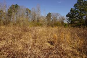 Photo 4 of 4  ·  4 of 4 Photos for Sawyerville Homesite & Timber Land in Hale County, AL
