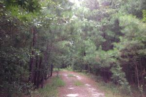 Midway Timber & Recreation Land in Liberty, GA (12 of 28)