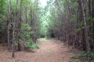 Midway Timber & Recreation Land - Liberty County GA