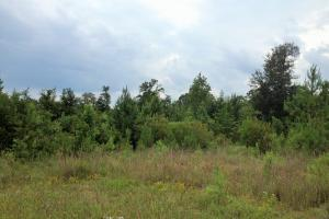 Hinesville Commercial Tract in Liberty, GA (3 of 5)
