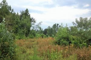 Hinesville Commercial Tract in Liberty, GA (5 of 5)