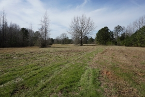 Sawyerville Hunting, Timber, & Pasture - Hale County AL
