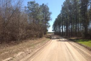 Bowman Recreational, Timber & Hunting Tract - Orangeburg County SC