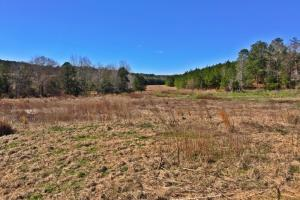 WILL DIVIDE! The Thomasville Highway 43 Tract - Clarke County AL