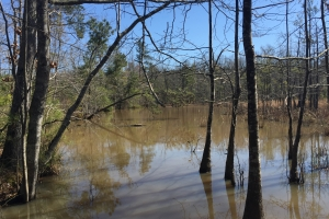 Summerton Hunting Opportunity  - Clarendon County SC
